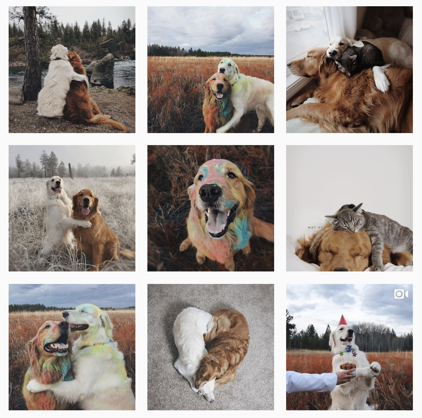 A photographer styled dog account such as this posts less frequently but has a cohesive aesthetic and professional-quality photos in each post.